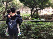 带着双胞胎去旅行|广州长隆野生动物园